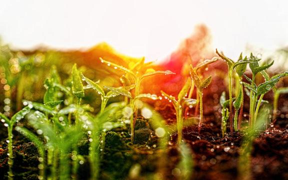 Sateen jälkeen maasta nousee huumaava mullan tuoksu.