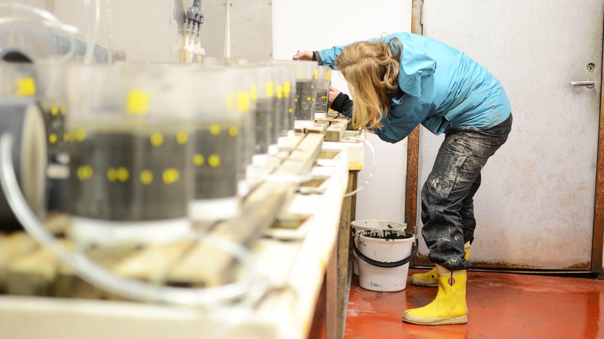 Pinja Näkki rakentaa bioturbaatiokoetta Tvärminnessä. Pohjaeläimet hautaavat mikromuoveja noin viiden senttimetrin syyvyyteen.