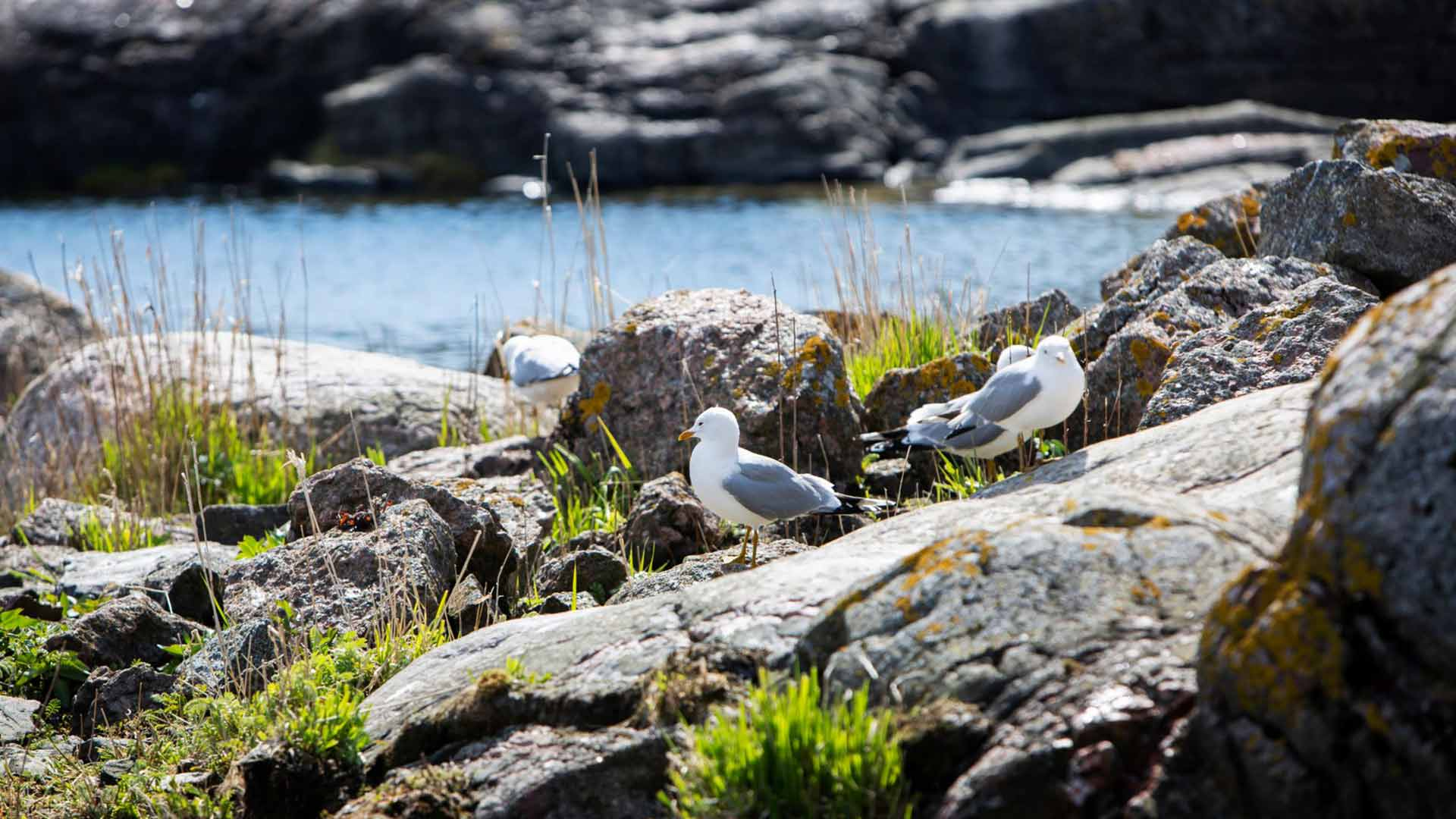 """""""Tove rakasti olla saaristossa ja hän kunnioitti luontoa ja merta."""""""