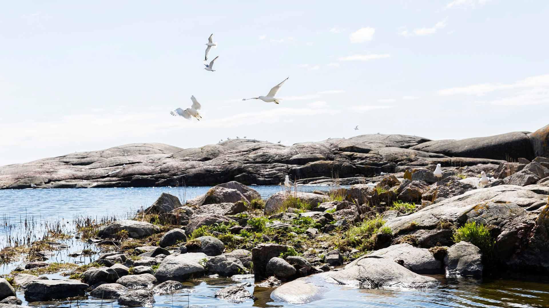 Tove Janssonin erityisen rakas suhde kasvoi juuri Harun saareen, sillä vasta siellä hän sai asua ensimmäistä kertaa yhdessä Tuulikin kanssa.