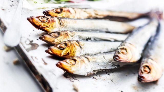 Itämeren rasvaisiin kaloihin saattaa kertyä pieniä määriä ympäristömyrkkyjä