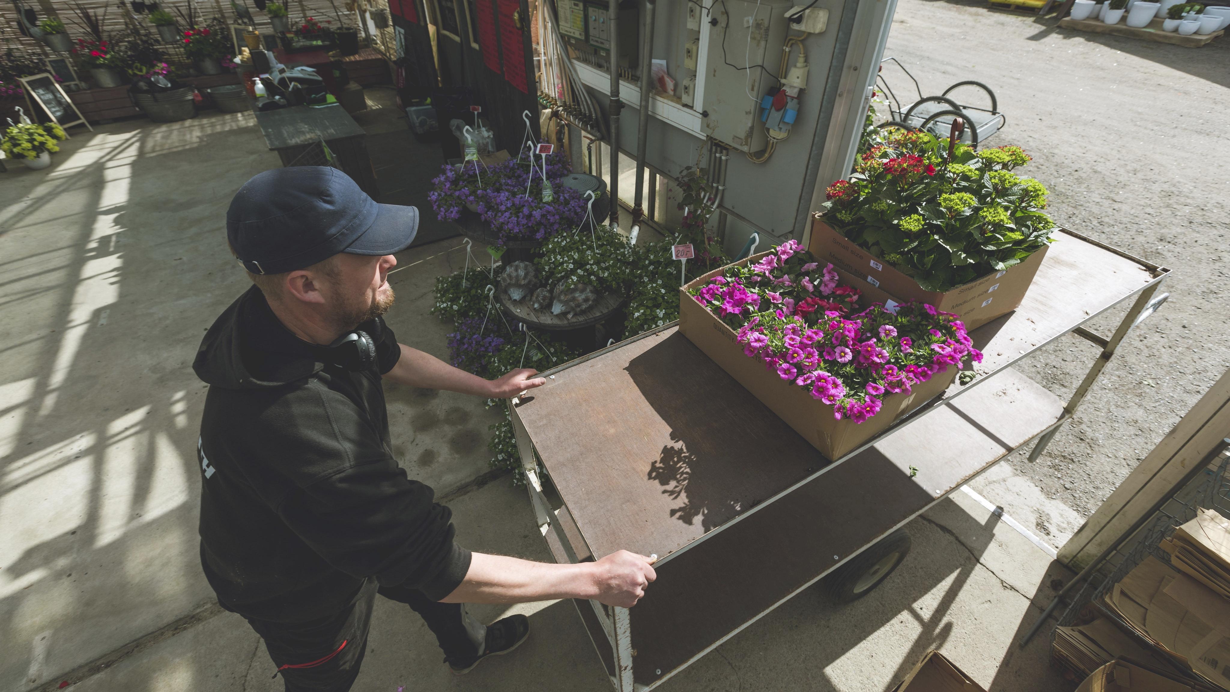 Kauppapuutarha Honkasen tarha suljetaan viikkoa aiemmin kuin tavallisesti, koska kaikki viljellyt kasvit alkavat olla myyty.