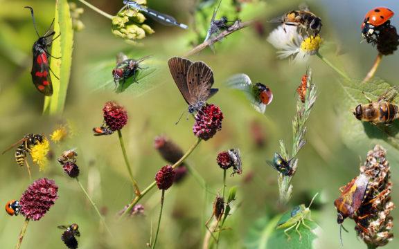 Hyönteisille maistuva ravinto käy luonnossa ravintoarvoltaan yhä köyhemmäksi.