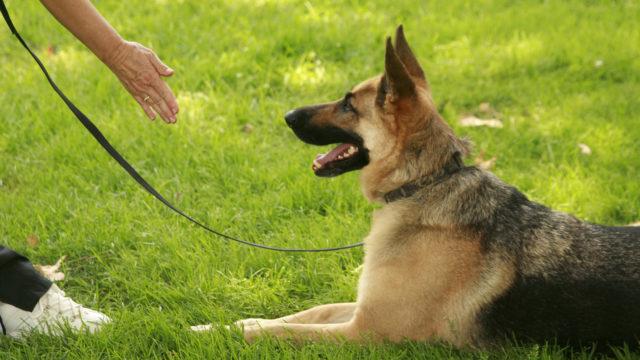 Koirakouluttajaohjaaja on suosittu verkossa.