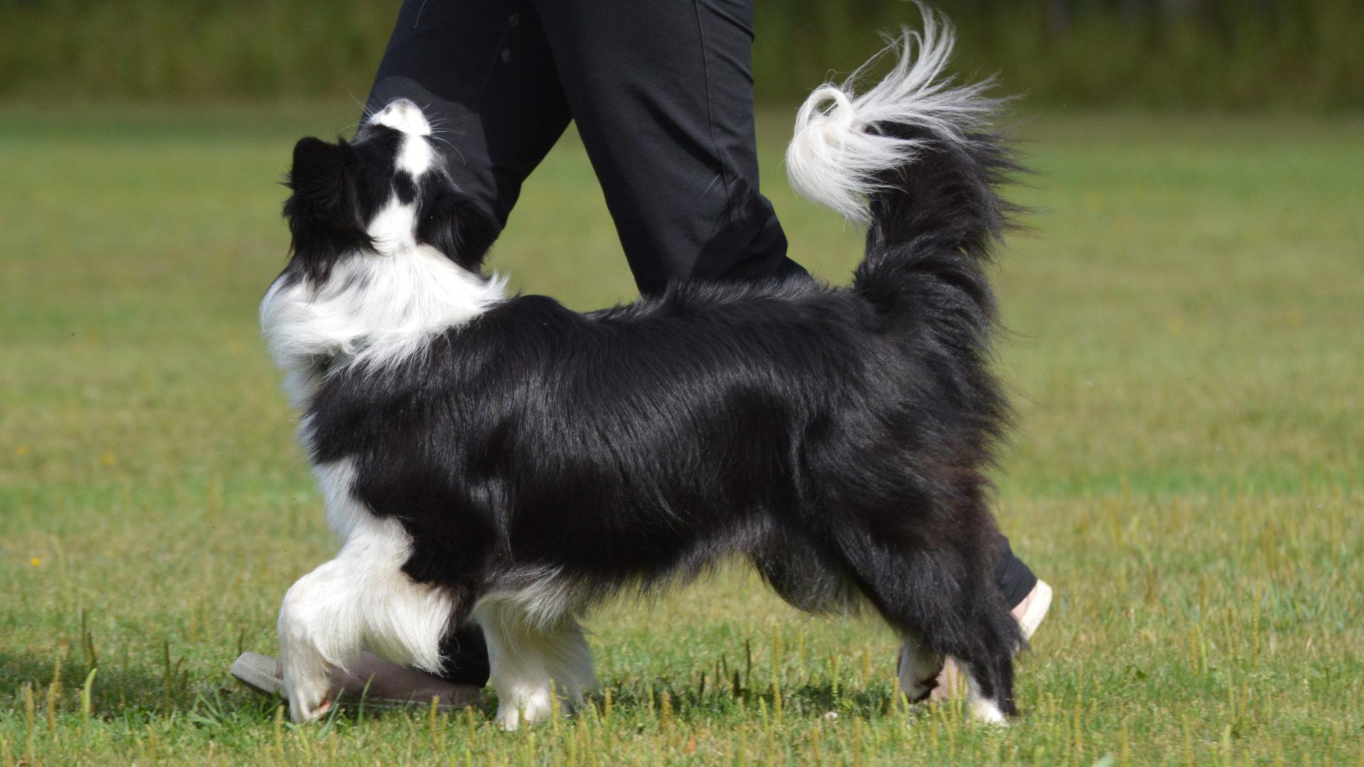 Sari Paavilainen on koirakouluttajaohjaaja