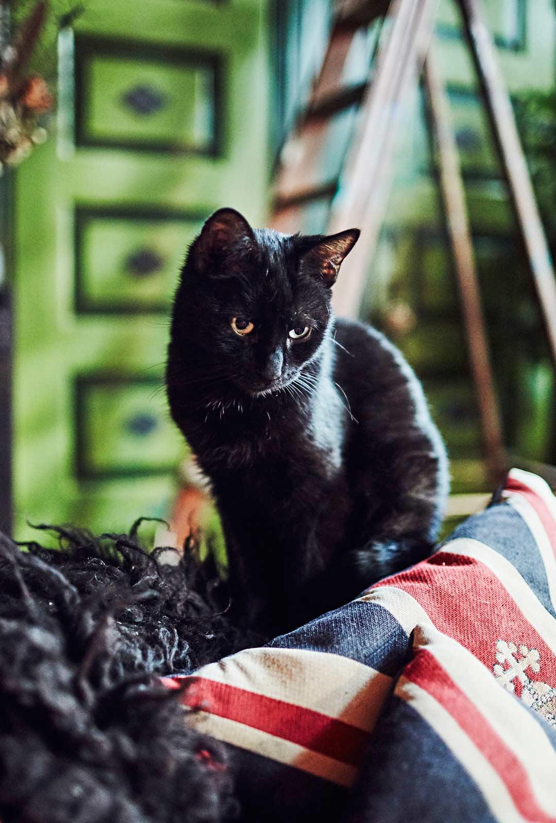 Myrkky-kissa viihtyy myrkynvihreiden kaapinovien edessä. Se on yksi Terhin lempivärejä.