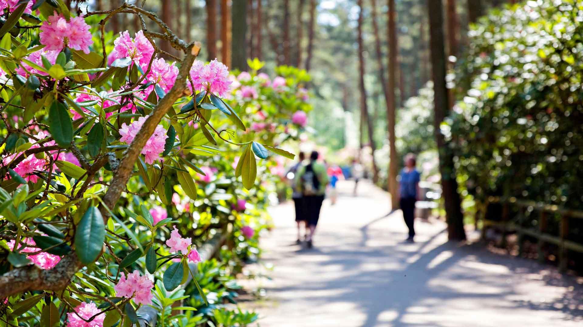 Kaupunkien puistot ovat joskus uskomattomia kukkakeitaita, joissa viihtyy pitemmänkin tovin.