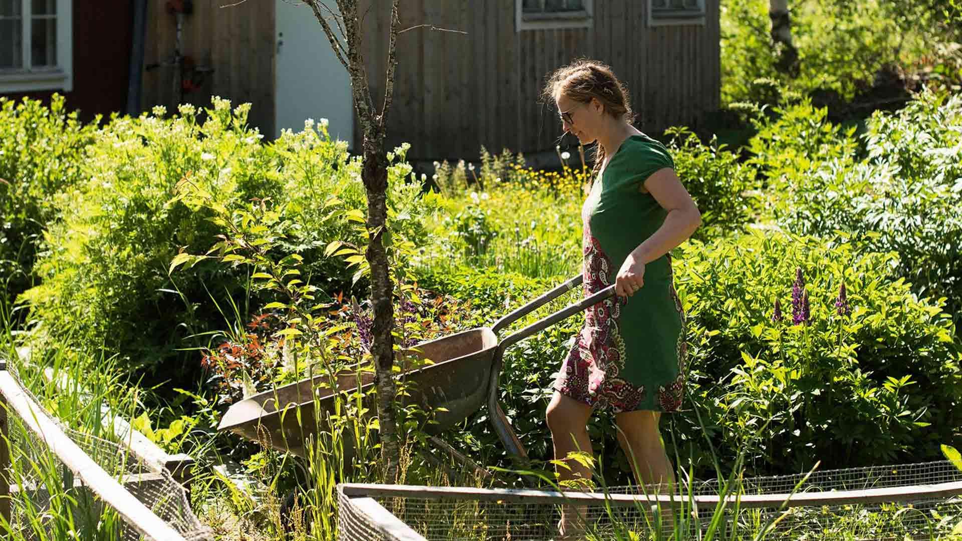 Nykyisin omavaraistelu on Österåkereille normaalia arkea. Pellolla ja kasvimaalla kasvaa perunaa, porkkanaa ja palsternakkaa, pinaattia ja salaatteja, papuja ja avomaankurkkuja.