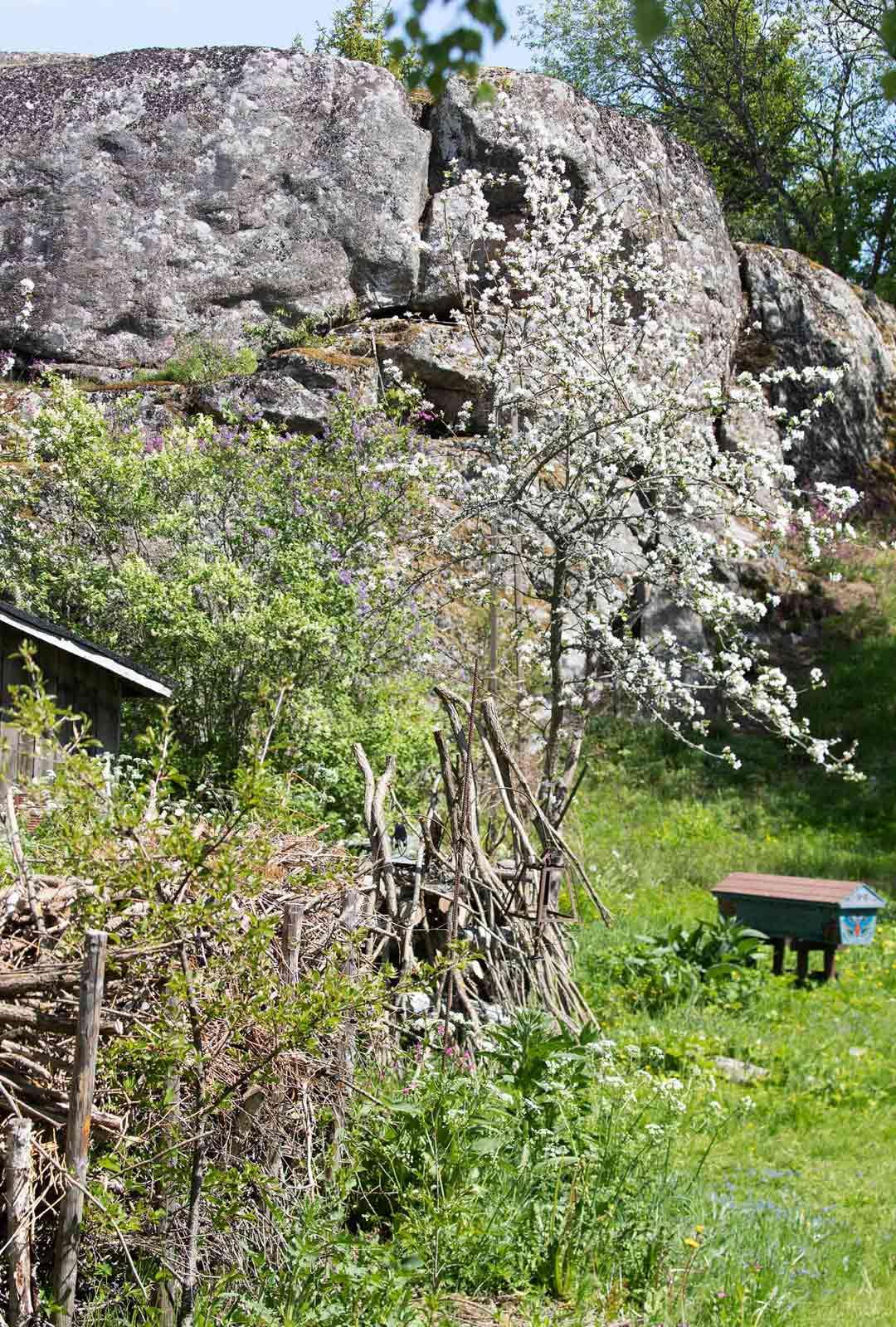 Vielä muutama vuosi sitten linnavuori oli sankan pensaiston peittämä. Nyt ympäristöä on harvennettu muistuttamaan jälleen paremmin satojen vuosien takaisesta menneisyydestä.
