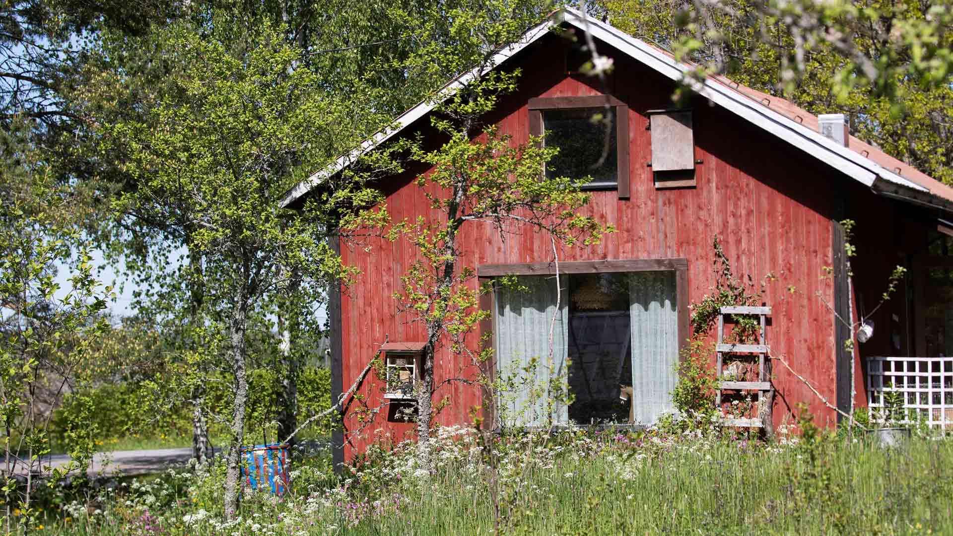 Kirjailija Reetta Niemelän työhuone Maskussa henkii luonnonläheisyyttä. Seinille on ripustettu hyönteishotelleja ja linnunpönttöjä.