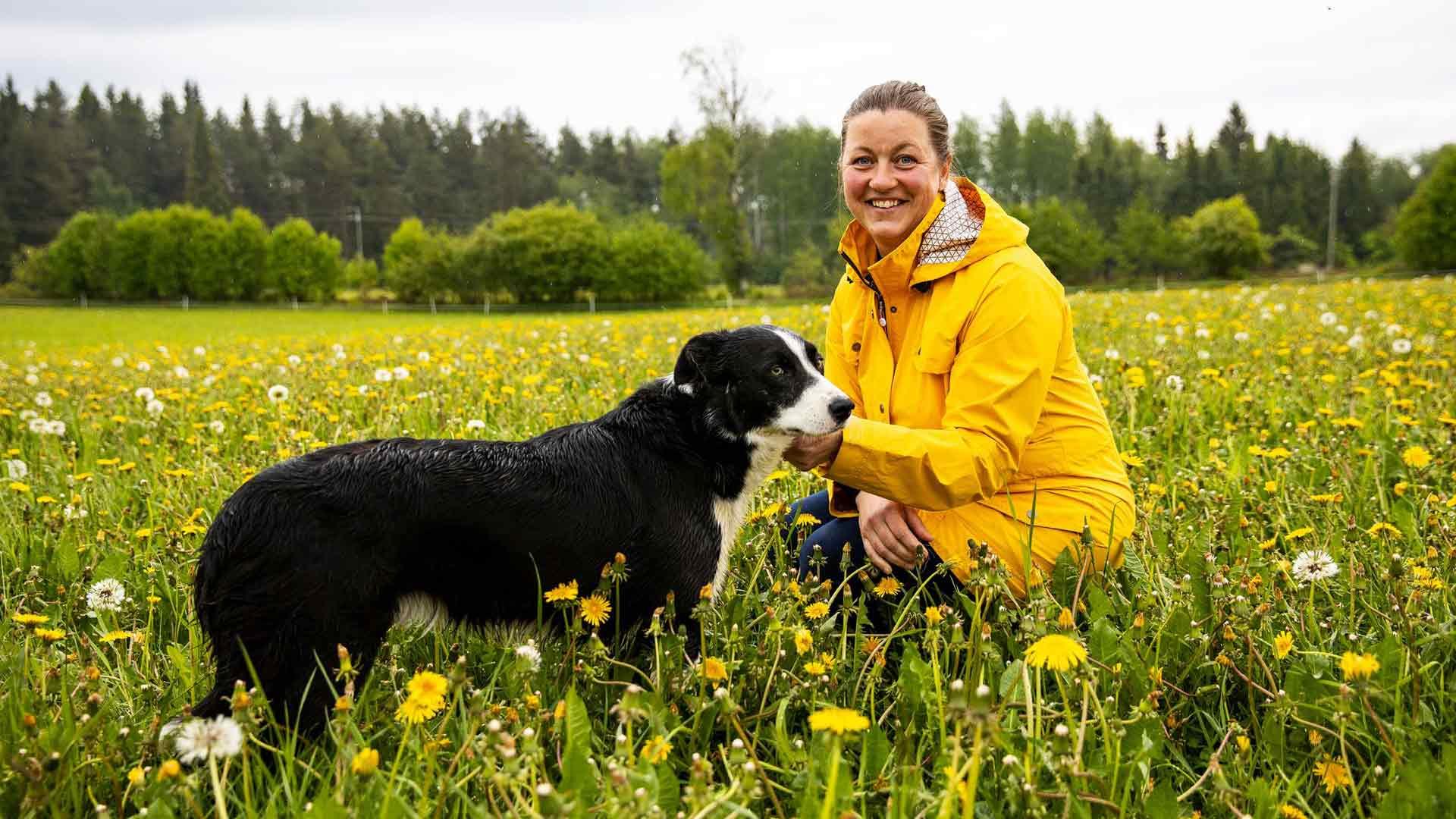 Tiisanmäen lammastilan emäntä Hanna Niskanen ja bordercollie Jimi ovat saumaton työpari.