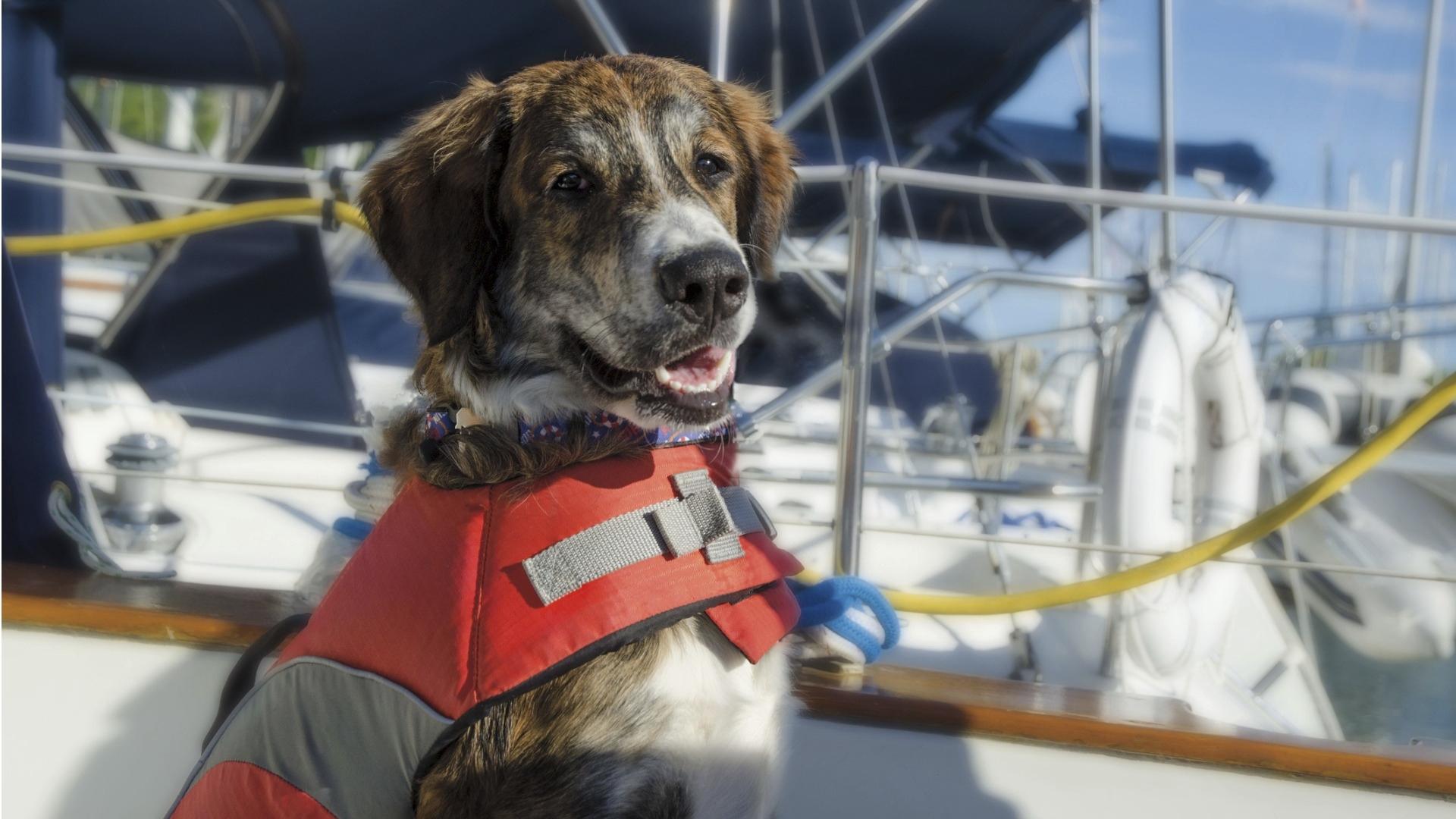 Merellä jokaiselle pitäisi veneessä muistaa pukea pelastusliivit, myös lemmikeille.