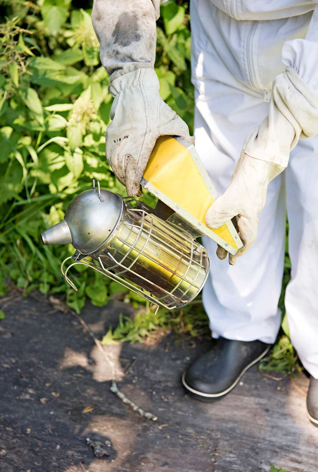 Mehiläisille annetaan savua savuttimella, jolloin ne rauhoittuvat.
