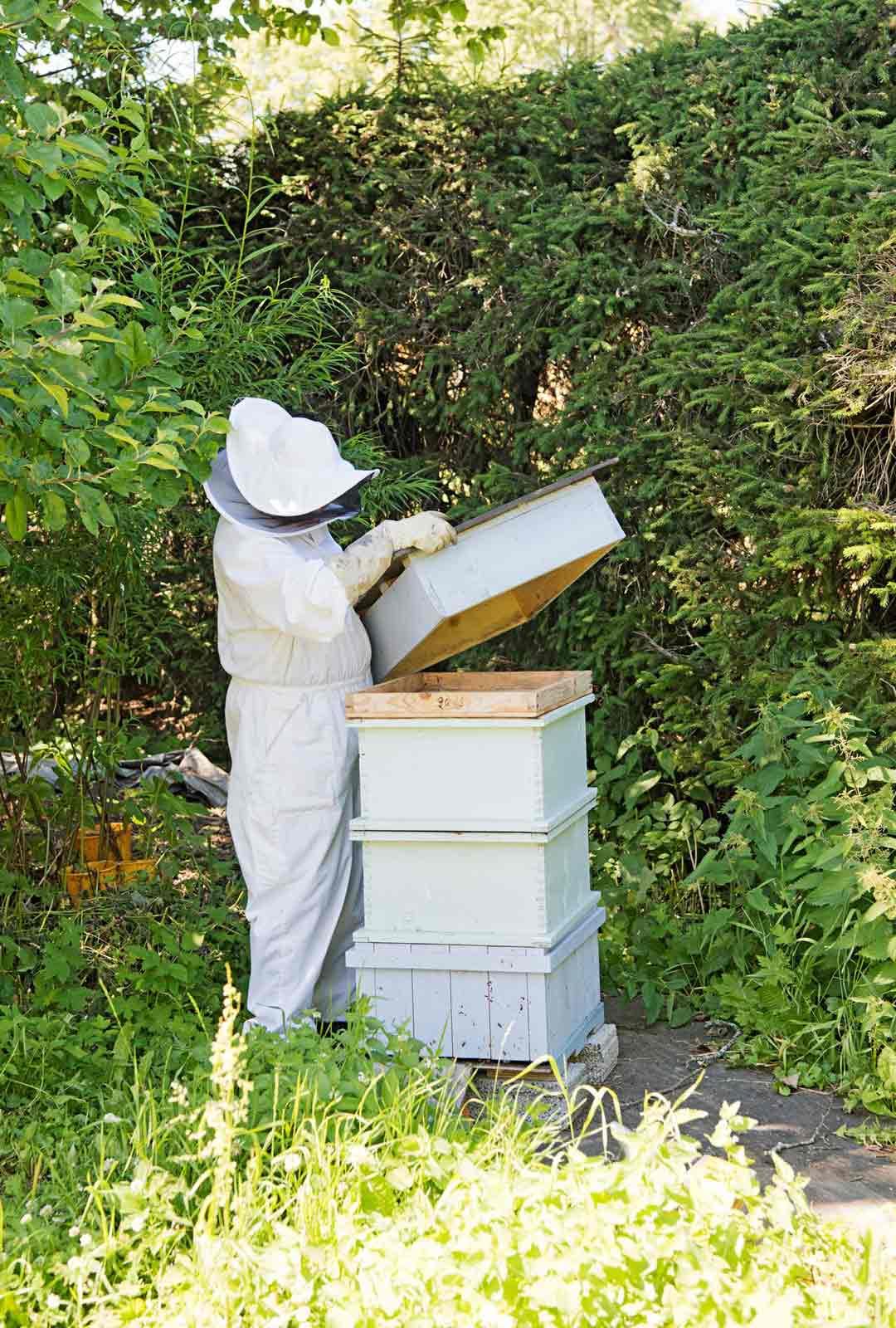 Mehiläisten kasvattaja tarvitsee oikeanlaiset suojavarusteet.