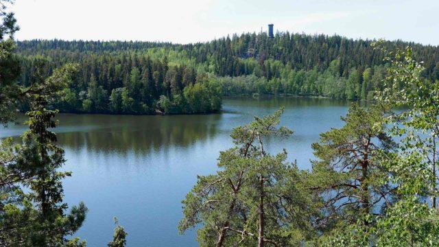 Sibeliuksen metsä
