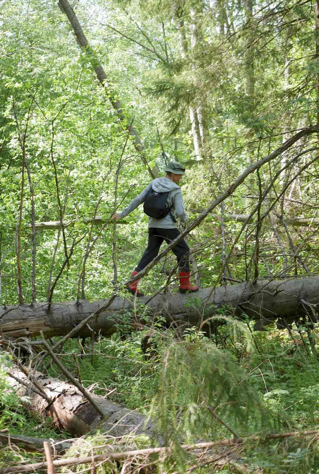 Puron yli pääsee luonnonsiltaa pitkin.