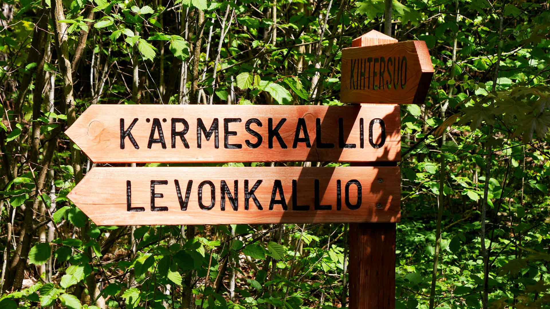Viitat auttavat löytämään metsän kiinnostavat kolkat.