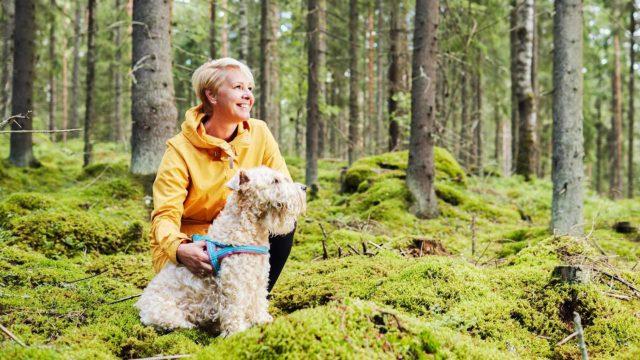 Päivi Tammilehto ja Kiira-koira viihtyvät lähimetsässä.