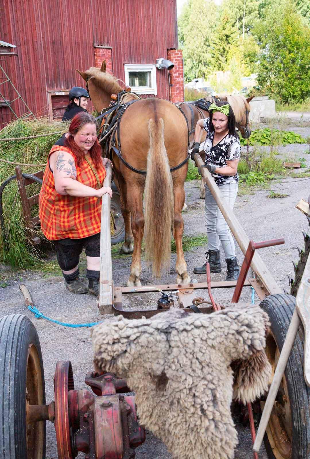 Aisoihin hevoset opetetaan jo varsana, sillä niiden välissä on totuttava työskentelemään.