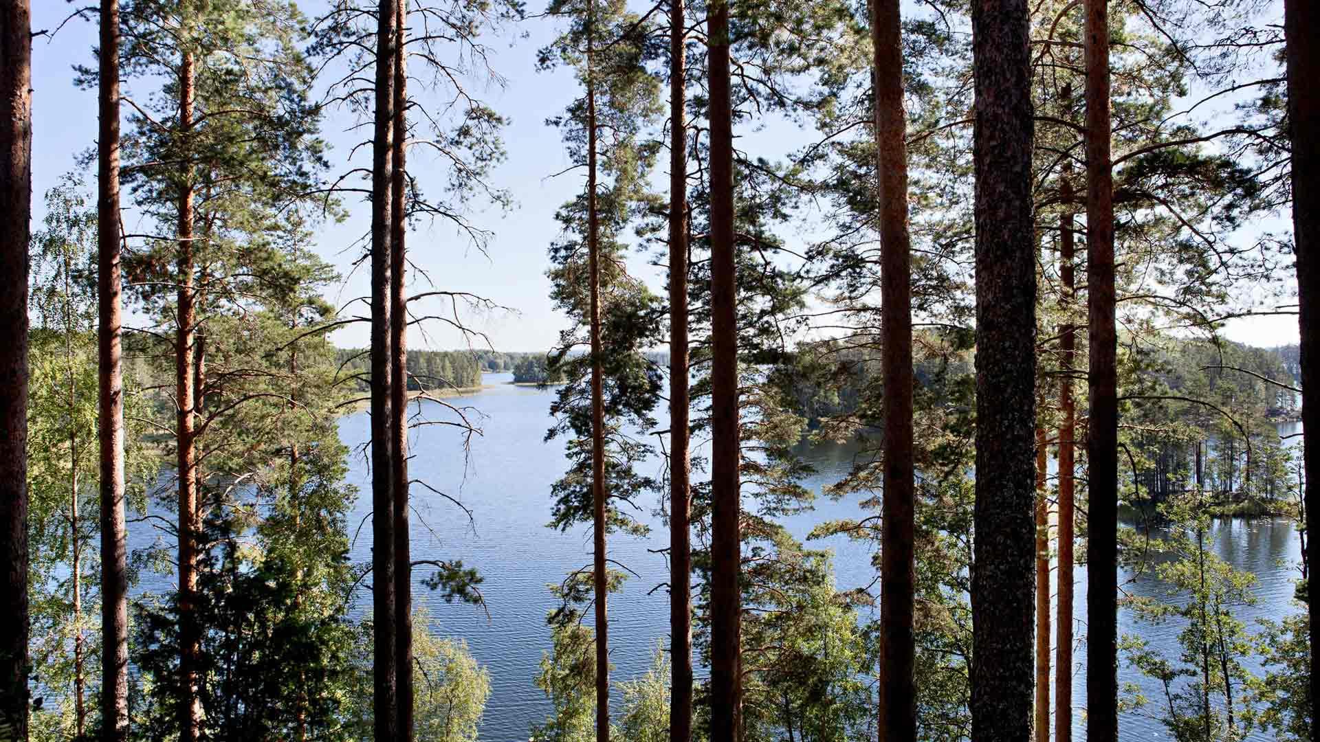 Punkaharjun mäntymetsät ovat Suomen kansallisaarre ja sopivat hyvin parantolafilosofiaan. Metsän ja raittiin ilman tiedettiin tekevät hyvää keuhkosairaille.