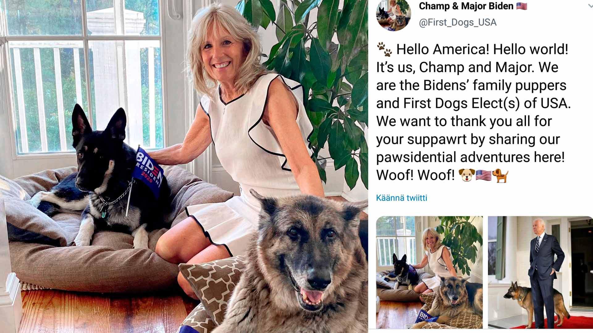 """Jill ja Joe Biden ostivat Champ-saksanpaimenkoiransa 2008 kennelistä. 2018 perhe """"adoptoi"""" kaltoinkohdellun Major-pennun. Koirilla on oma Twitter-tilinsäkin."""