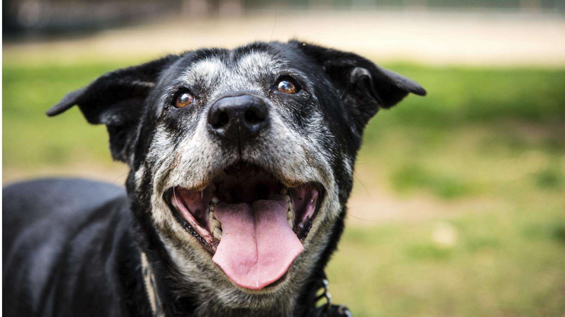 Hyvänkään hoitotasapainon löytyminen takaa ikuisesti oireetonta koiraystävää. Koirien atopian olomuoto voi muuttua iän myötä, jolloin hoitoa voidaan joutua taas muuttamaan.
